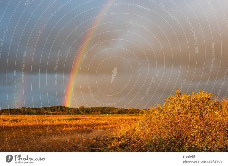 Landschaft auf der Insel Moen in Dänemark Erholung Ferien & Urlaub & Reisen Tourismus Natur Wolken Herbst Baum Wiese Feld Wald blau Idylle Umwelt Regenbogen