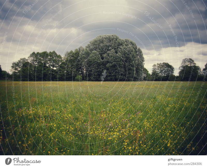 düster Natur grün Pflanze Baum Blume Wolken Landschaft Wald Umwelt dunkel Wiese Gras Stimmung Regen Wetter bedrohlich