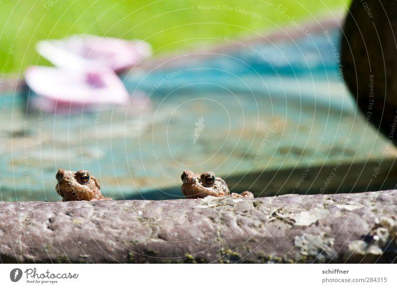 Randerscheinung Tier Wildtier Frosch 2 Tierpaar Tierjunges klein Erholung Blick Ecke Randgruppe Randzone Am Rand Kröte Amphibie Futterhäuschen tierisch