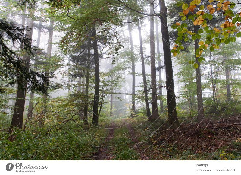 Waldspaziergang wandern Umwelt Natur Landschaft Urelemente Herbst Klima Klimawandel Wetter Nebel Pflanze Baum Laubwald Wege & Pfade frisch kalt schön Stimmung