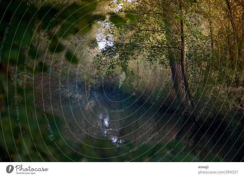 Bach Umwelt Natur Landschaft Baum Sträucher Wald dunkel Farbfoto Außenaufnahme Menschenleer Morgen Dämmerung Licht Schatten Low Key Schwache Tiefenschärfe