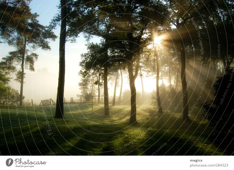 Sonnenaufgang Herbstnebel im Wald Umwelt Natur Landschaft Himmel Sonnenuntergang Sonnenlicht Schönes Wetter Nebel Baum Gras Blatt Garten Wiese Dorf Stadtrand