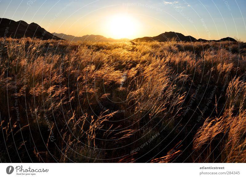 Sonnenuntergang in der Namib Abenteuer Ferne Freiheit Safari Expedition Natur Landschaft Sonnenaufgang Sonnenlicht Schönes Wetter Gras Wüste Grasebene Namibia