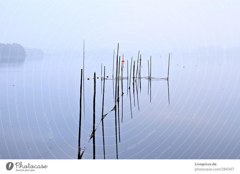 grau wie sau Himmel Natur Wasser Pflanze Baum ruhig Landschaft Küste Holz See Stil Nebel Seeufer Landwirtschaft Fischereiwirtschaft Arbeitsplatz