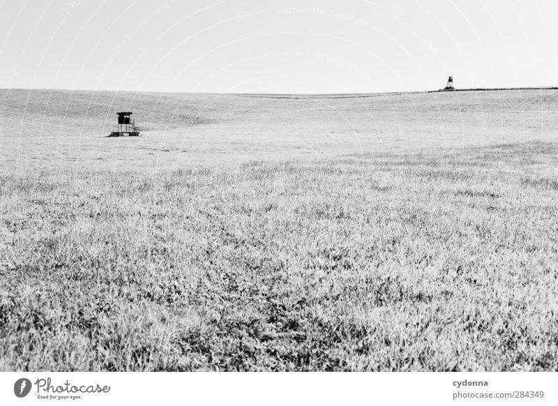 Jagd-Duell Umwelt Natur Landschaft Wolkenloser Himmel Sommer Wiese Feld ästhetisch Partnerschaft Einsamkeit entdecken Erwartung Freiheit bedrohlich Horizont