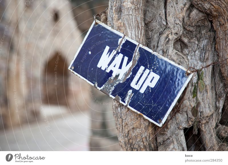 WAY UP blau alt weiß Baum Holz Business Metall braun Kraft Erfolg Schilder & Markierungen Schriftzeichen Hoffnung Ziel Zeichen Vertrauen