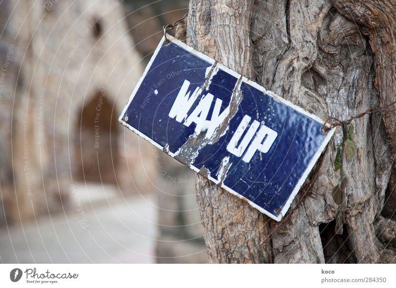WAY UP Wirtschaft Business Karriere Erfolg Baum Holz Metall Zeichen Schriftzeichen Schilder & Markierungen hängen alt nachhaltig trashig blau braun weiß