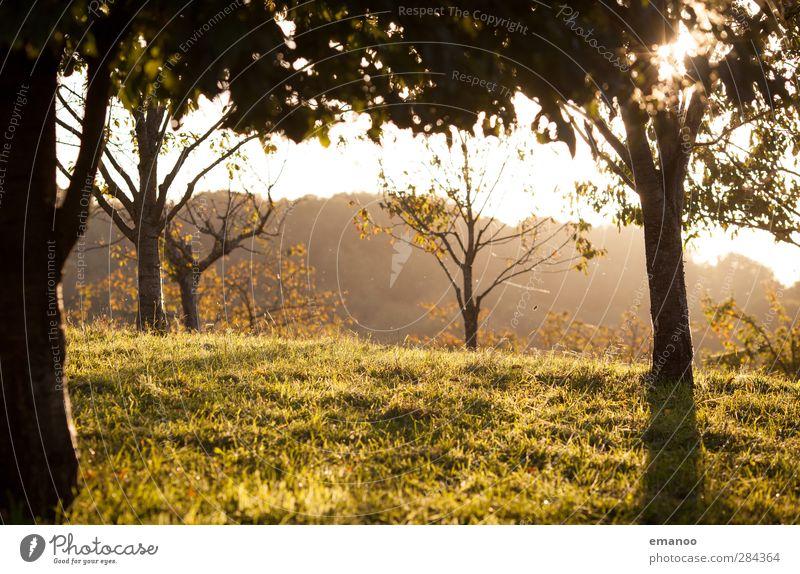 Herbstabend Umwelt Natur Landschaft Pflanze Sonne Klima Wetter Baum Gras Park Wiese Feld Wald Hügel Berge u. Gebirge Wärme gelb grün Schwarzwald Streuobstwiese