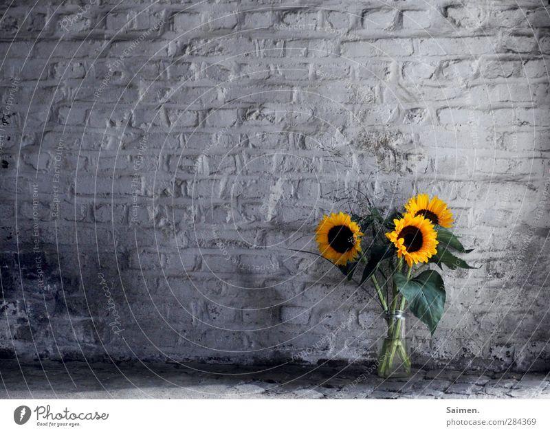flowers in the garage grün Pflanze Farbe Blume Blatt gelb dunkel Wand Mauer dreckig Vergänglichkeit Blumenstrauß Duft Stillleben Sonnenblume Gegenteil