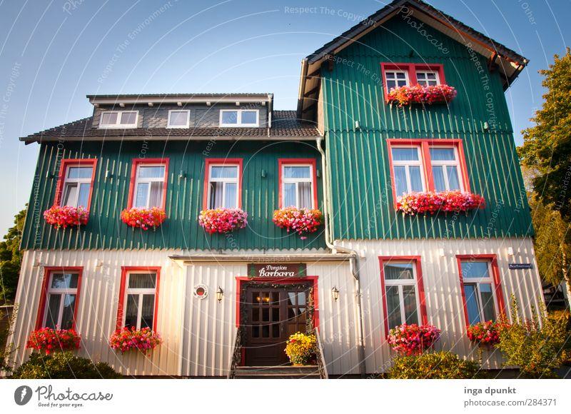 Schönes Elend! Umwelt Blume Harz Mittelgebirge Sachsen-Anhalt Deutschland Dorf Menschenleer Haus Gebäude Ferienhaus Urlaubsfoto Fenster schön Häusliches Leben
