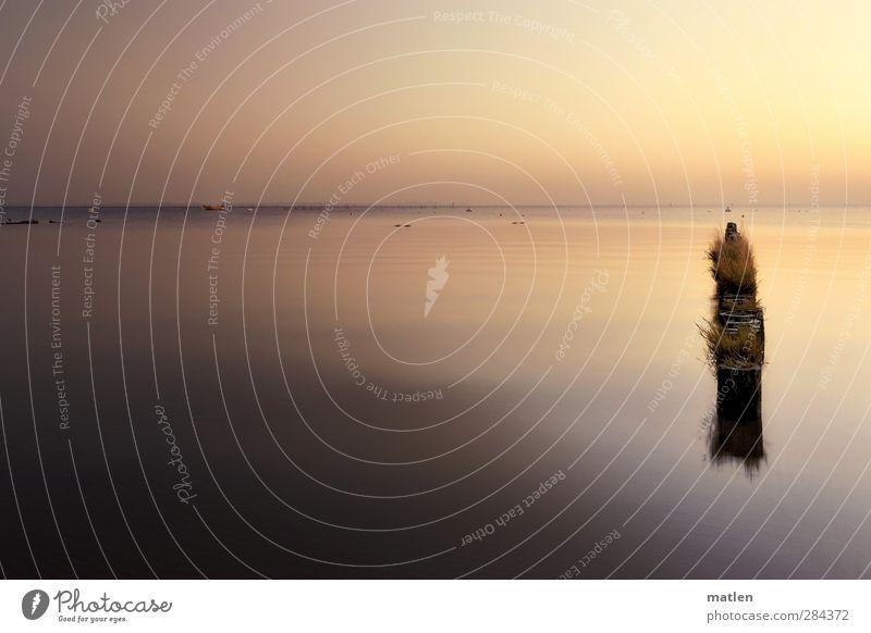 mini Landschaft Himmel Wolkenloser Himmel Horizont Sonnenaufgang Sonnenuntergang Herbst Schönes Wetter Gras Küste Meer Bootsfahrt Ruderboot Holz Unendlichkeit