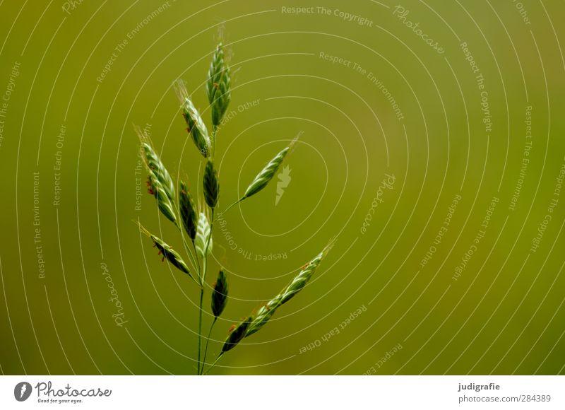 Gras Natur grün schön Sommer Pflanze Umwelt Leben Blüte natürlich Wachstum