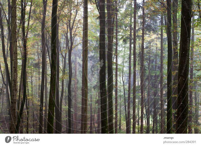 Alle wollen zurück zur Natur, aber keiner zu Fuß Ausflug Umwelt Sommer Herbst Klima Klimawandel Pflanze Baum Baumstamm Wald Urwald dunkel schön Stimmung