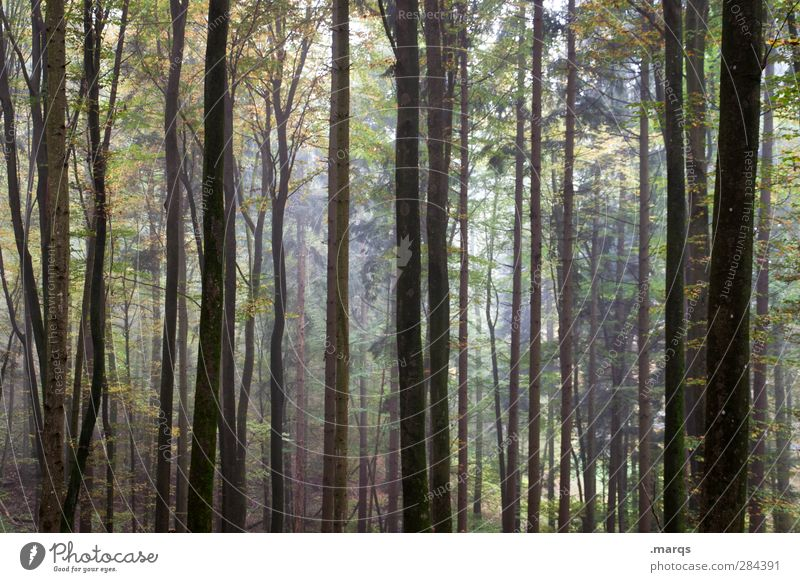 Alle wollen zurück zur Natur, aber keiner zu Fuß Natur schön Sommer Pflanze Baum Wald Umwelt dunkel Herbst Stimmung Klima Ausflug Urwald Baumstamm Klimawandel