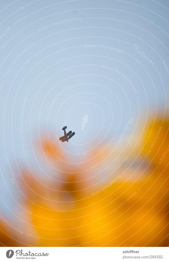 Kamikaze Himmel Wolkenloser Himmel Luftverkehr Flugzeug Doppeldecker Sportflugzeug blau braun gelb Sturzflug Mut Freude Absturz Absturzgefahr Freizeit & Hobby