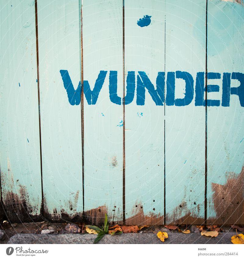 Solls ja geben Umwelt Herbst Schönes Wetter Mauer Wand Holz alt blau Schriftzeichen hell-blau Wunder Zaun herbstlich Großbuchstabe Graffiti Schmiererei Wort