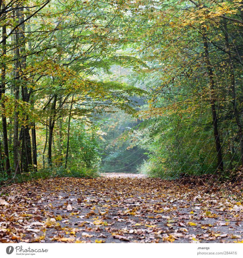 Tunnelblick Natur schön Pflanze Baum Blatt Wald Umwelt Herbst Wege & Pfade Stimmung Klima frisch Zukunft Ausflug Perspektive Wandel & Veränderung