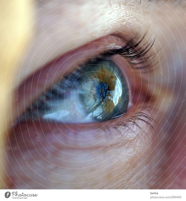 Mama hat den Herbst im Blick Mensch Frau blau Baum Erwachsene Auge feminin Herbst Haut nah Wimpern
