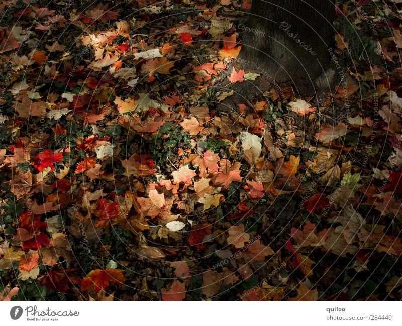 Herbststimmung Natur rot Blatt dunkel Wald Wiese braun Stimmung liegen Erde Vergänglichkeit Wandel & Veränderung fallen Verfall