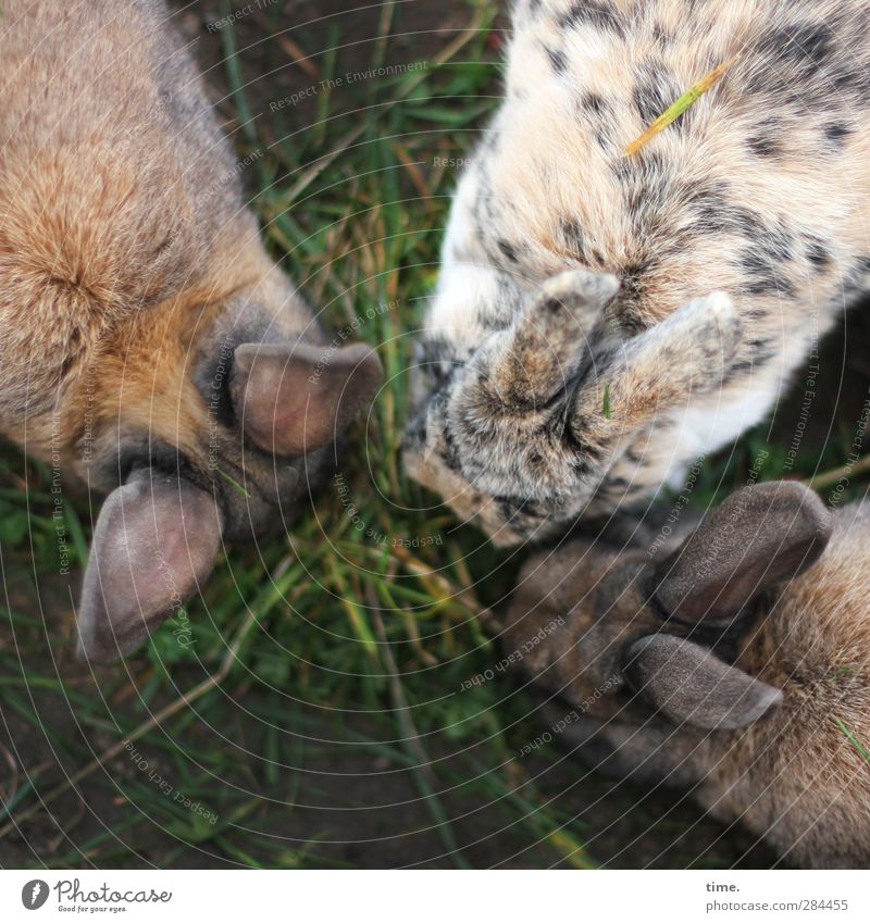 Stammtisch Tier ruhig Leben Gras Zusammensein sitzen Zufriedenheit Warmherzigkeit Kommunizieren Tiergruppe planen einzigartig Ohr Fell Vertrauen Konzentration