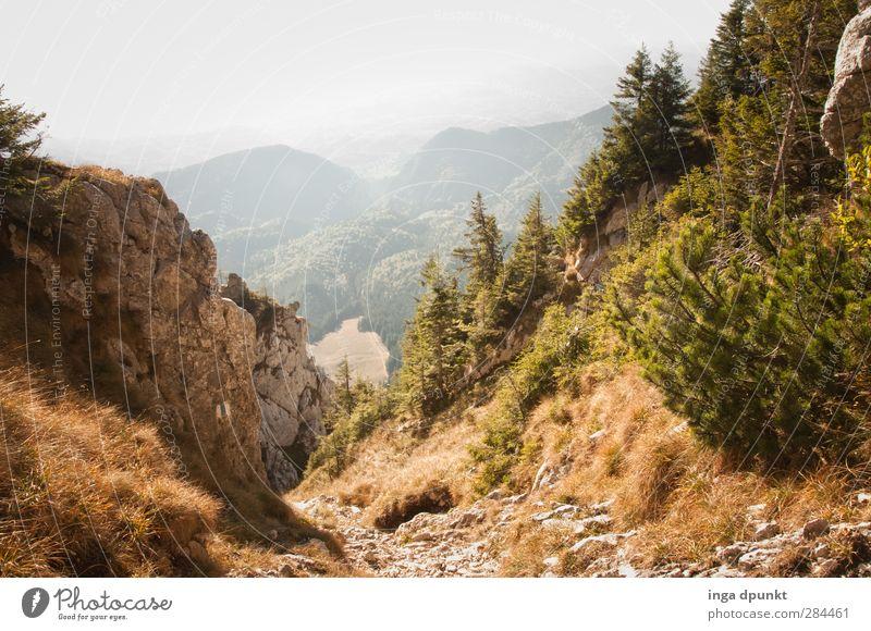 Wildnis Natur Ferien & Urlaub & Reisen Pflanze Landschaft Erholung Wald Umwelt Berge u. Gebirge natürlich Tourismus Sträucher Abenteuer Schönes Wetter erleben