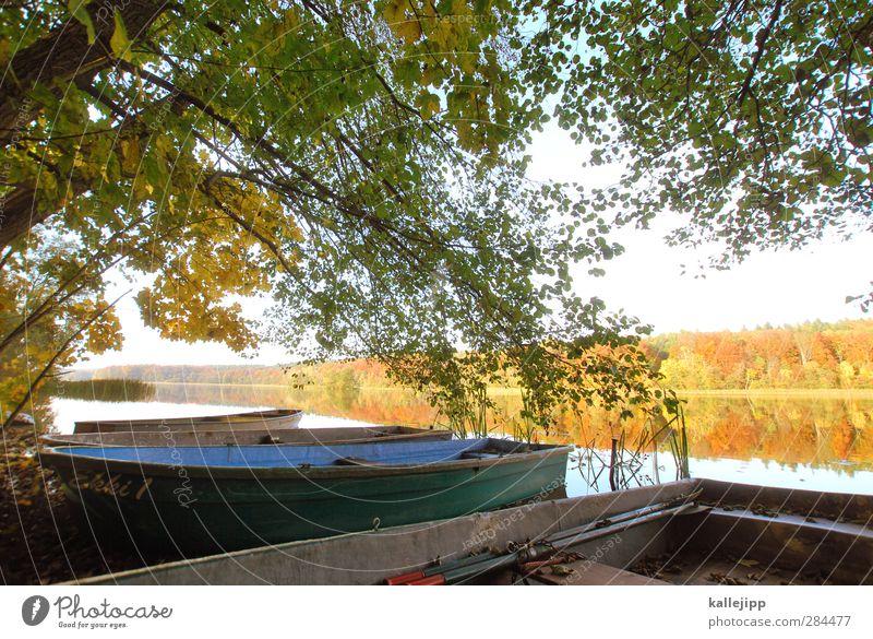 ruhestand Umwelt Natur Landschaft Pflanze Tier Wasser Herbst Baum Blatt Seeufer Hafen gelb gold Wasserfahrzeug Ruderboot Liegeplatz Farbfoto Außenaufnahme Licht
