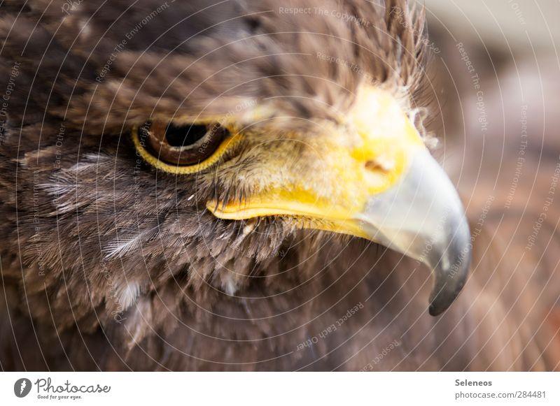 Ernst Natur Tier Umwelt Auge Freiheit Vogel natürlich Wildtier Feder nah Tiergesicht Jagd Schnabel