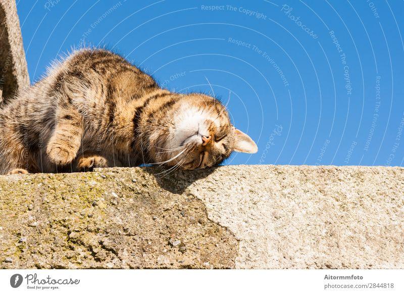 Schöne Katze schön Gesicht Freundschaft Natur Tier Himmel Wolken Felsen Pelzmantel Haustier Stein sitzen stehen lustig Neugier niedlich blau grau weiß