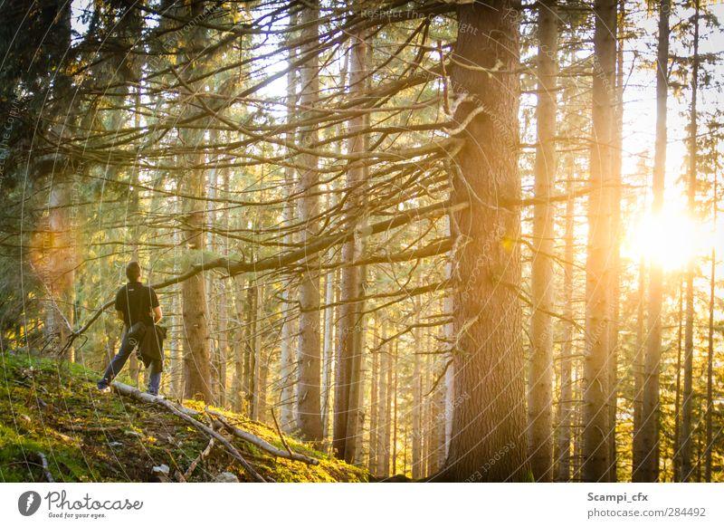 Herbstregen Natur Pflanze Baum ruhig Landschaft Erholung Wald Gras Freiheit Horizont Zufriedenheit Abenteuer Schönes Wetter Idylle Alpen