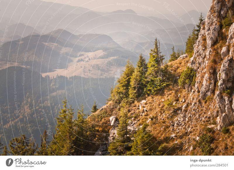 Blick in die Ferne Natur Ferien & Urlaub & Reisen Pflanze Baum Landschaft Wald Umwelt Berge u. Gebirge Herbst Gras Wege & Pfade Felsen Abenteuer Schönes Wetter