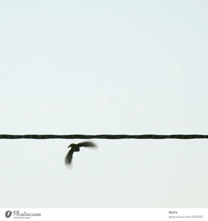 Und ab dafür Himmel Natur Tier Umwelt Bewegung klein Luft Linie Vogel gehen fliegen einzeln Kabel Flucht flüchten