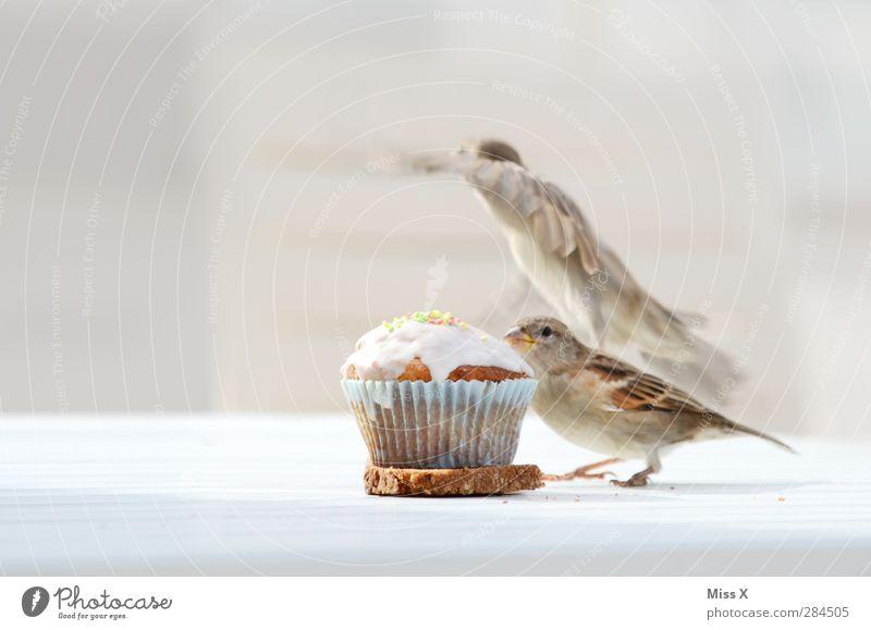 Diebitze Lebensmittel Teigwaren Backwaren Kuchen Dessert Ernährung Frühstück Kaffeetrinken Tier Wildtier Vogel 2 fliegen lecker Neugier süß Spatz Fressen