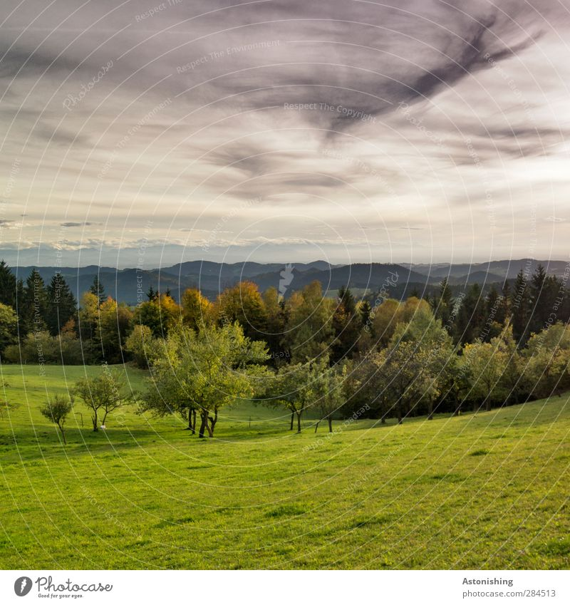 es wird düster! Himmel Natur grün Pflanze Baum Blatt Wolken Landschaft schwarz Wald Umwelt Wiese Berge u. Gebirge Herbst Gras grau