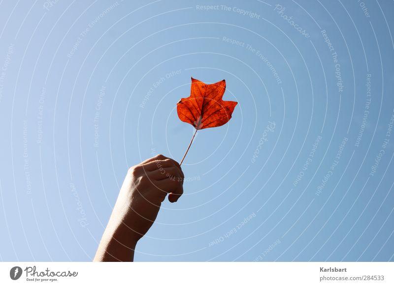 Ein Blatt Herbst Mensch Kind Himmel Natur Hand Freude Erholung Spielen Gesundheit Park Kindheit Gesundheitswesen Schönes Wetter Hoffnung