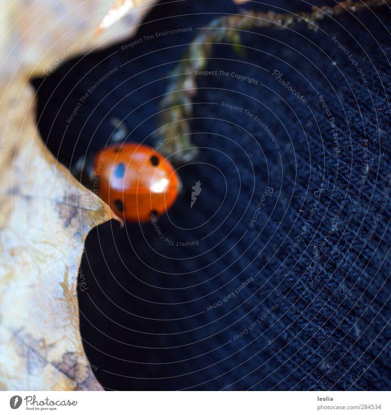 1,2,3,4,Eckstein Natur Pflanze rot Tier Blatt schwarz Herbst klein braun natürlich Wildtier Schönes Wetter Streifen Punkt nah Insekt