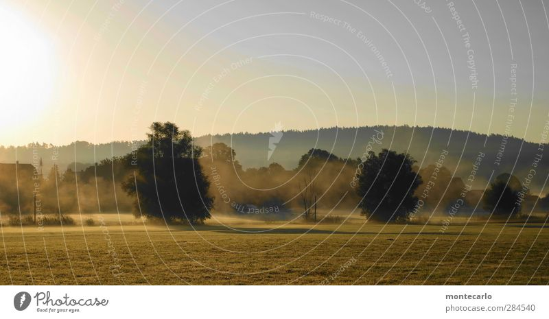 septembermorgen... Umwelt Natur Landschaft Erde Himmel Wolkenloser Himmel Sonne Sonnenaufgang Sonnenuntergang Sonnenlicht Herbst Schönes Wetter Nebel Pflanze