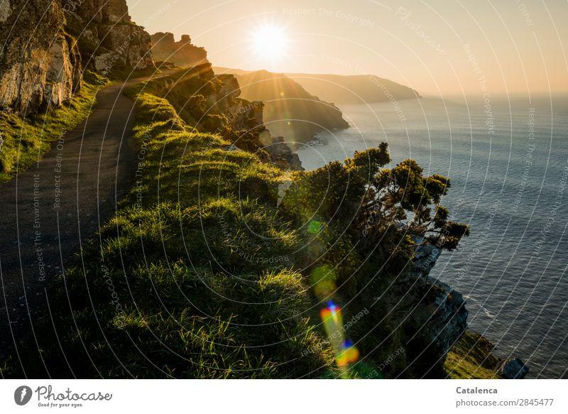 Klippenpfad Meer Wellen wandern Natur Landschaft Urelemente Erde Wasser Wolkenloser Himmel Horizont Sonnenaufgang Sonnenuntergang Schönes Wetter Pflanze Gras