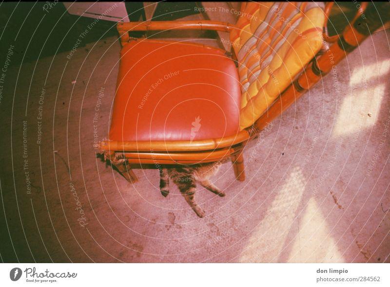 pussunderchair Wohnung Stuhl Haustier Katze 1 Tier unten Gelassenheit ruhig Zufriedenheit liegen Ledersitz rot Tigerfellmuster Farbfoto Innenaufnahme