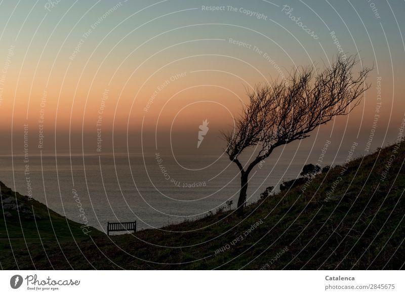 Ein Sitzplatz Meer Natur Landschaft Urelemente Wasser Wolkenloser Himmel Horizont Winter Schönes Wetter Pflanze Baum Sträucher Felsen Wellen Küste Bank Parkbank