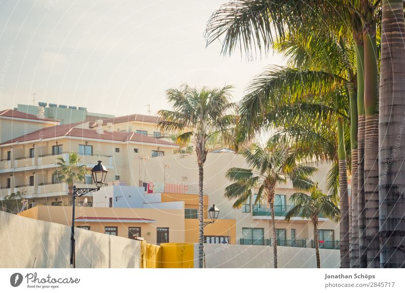 Puerto de la Cruz, Teneriffa Palme Hochhaus Haus Kanaren Spanien Süden Stadt Sonne heiß Klimawandel Wärme Ferien & Urlaub & Reisen Sommer Reisefotografie