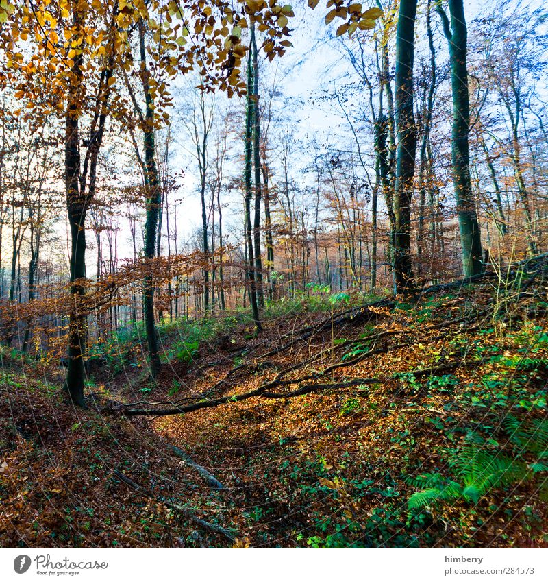 nur natur Natur Ferien & Urlaub & Reisen Pflanze Baum Blatt ruhig Landschaft Erholung Wald Umwelt Berge u. Gebirge Herbst Freiheit Wetter Erde Klima