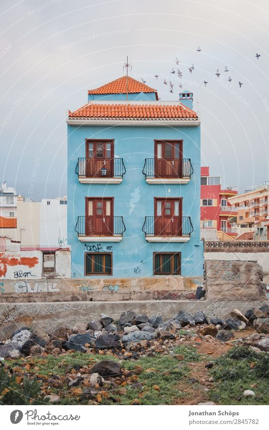 Blaue Hausfassade in Puerto de la Cruz, Teneriffa Stadt Tier Fenster Architektur Vogel Fassade fliegen Zufriedenheit ästhetisch Dach Altstadt Spanien