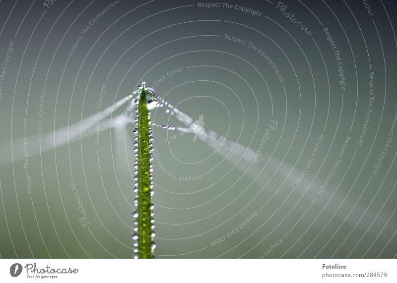 Früh morgens im Schloßpark... - HERBST Umwelt Natur Pflanze Urelemente Wasser Wassertropfen Herbst Gras Wiese hell nah nass natürlich grün Spinngewebe Schnur