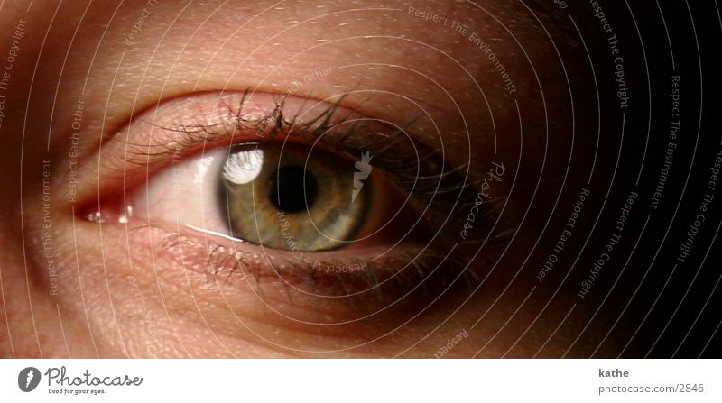 auge 01 Mensch Auge Perspektive Pupille Regenbogenhaut