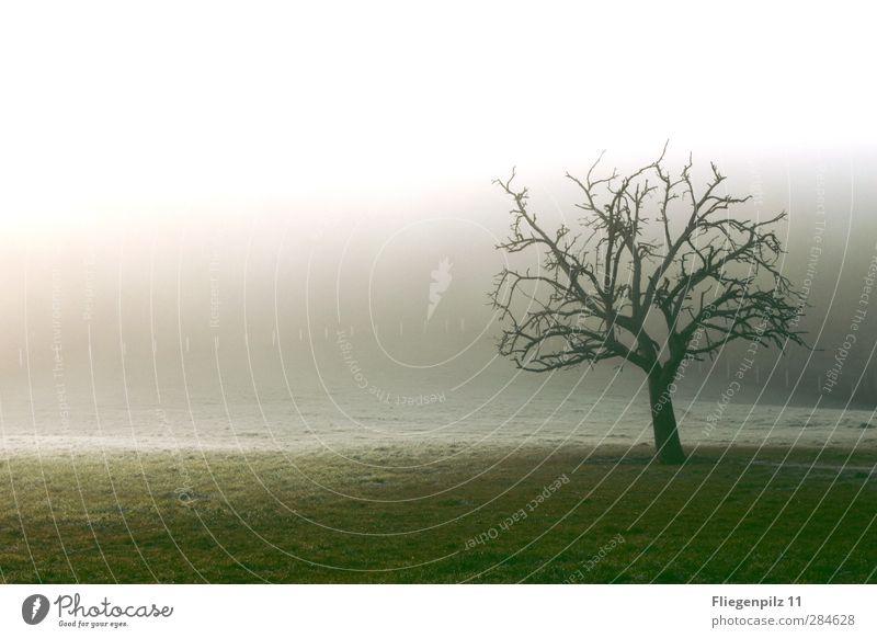 Kälte Umwelt Natur Landschaft Erde Sonnenlicht Herbst Winter Klima Wetter Nebel Eis Frost Pflanze Baum Gras Park Wiese außergewöhnlich Unendlichkeit gruselig
