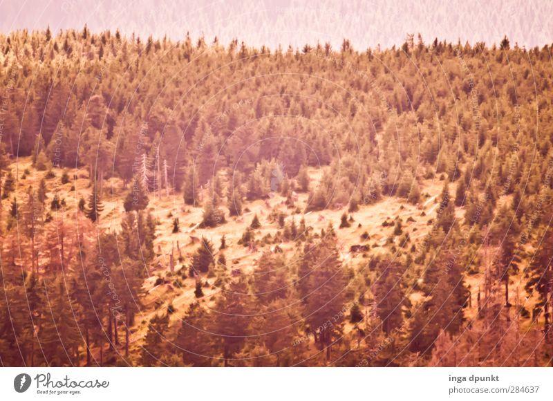 Waldsicht Natur Pflanze Baum Landschaft Ferne Umwelt Berge u. Gebirge Herbst natürlich Umweltschutz herbstlich Rumänien Karpaten Siebenbürgen