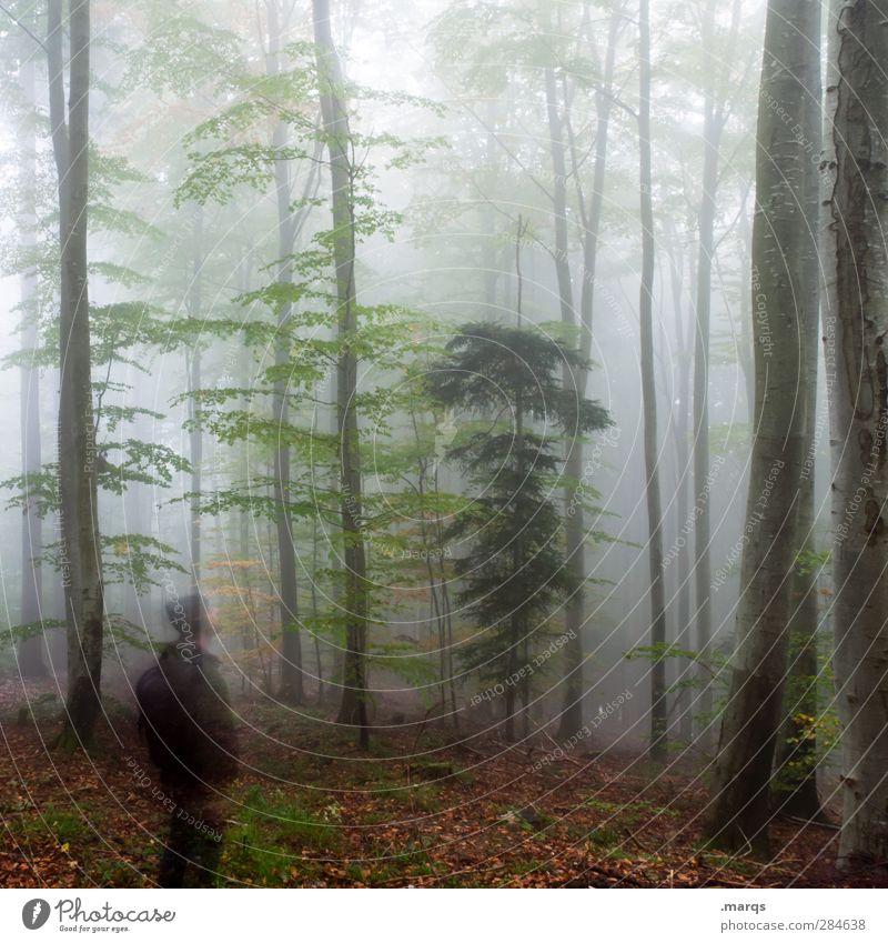 Waldgeist Mensch Natur Umwelt dunkel kalt Herbst Gefühle Stimmung Klima Nebel maskulin Zukunft Ausflug Vergangenheit Klimawandel