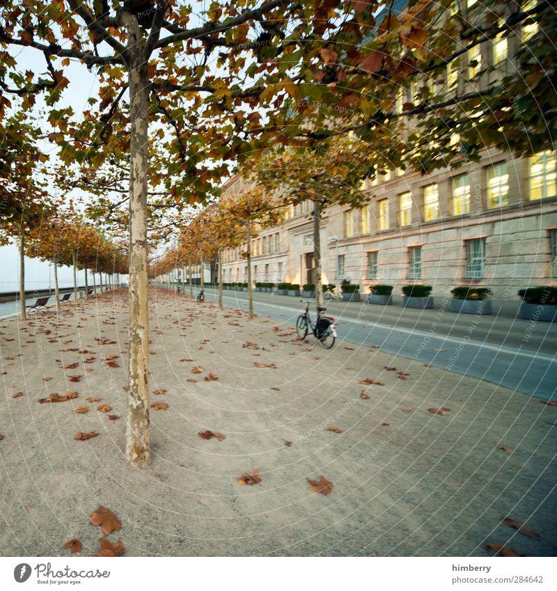 alone along Natur Stadt Pflanze Baum Landschaft Haus Straße Herbst Bewegung Wege & Pfade Architektur Gebäude Kunst Wetter Fahrrad Verkehr