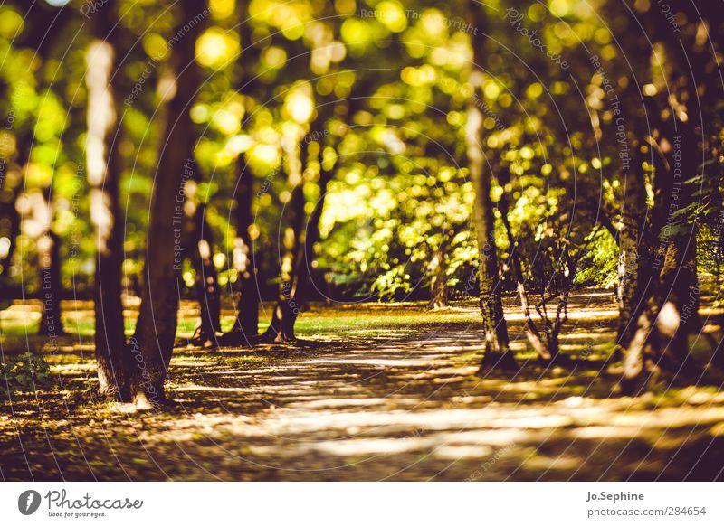 woods Umwelt Natur Pflanze Schönes Wetter Baum Park Wald grün Erholung Wege & Pfade Herbst Grünfläche Spazierweg lensbaby Farbfoto Gedeckte Farben Außenaufnahme