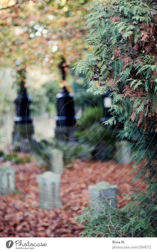 Gedenken II Baum Blatt Herbst Gefühle Traurigkeit Religion & Glaube Vergänglichkeit Trauer Schmerz Friedhof verlieren Grabstein dehydrieren